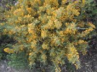 Flora de Benahaví